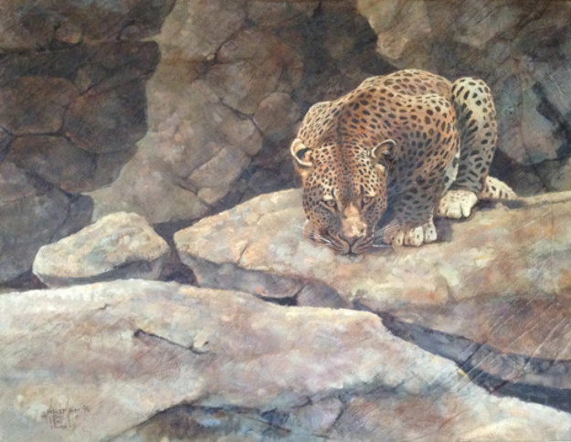 Leopard on Rocks 1996 35x55