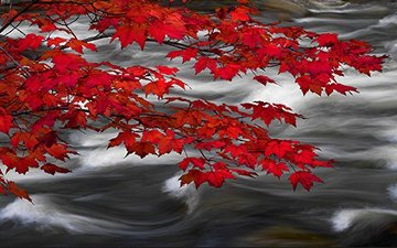River of Zen AP Panorama - Peter Lik