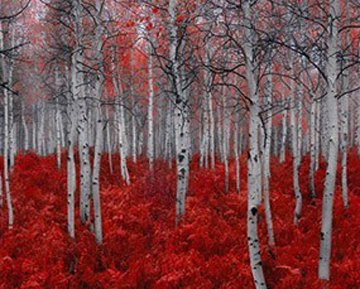 Rouge Panorama by Peter Lik