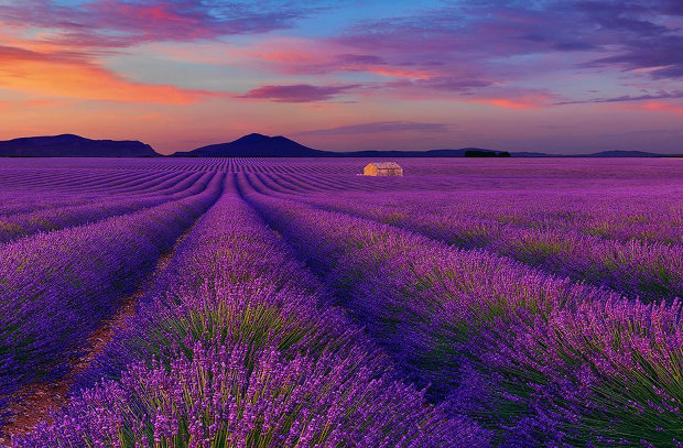 Le Reve (Valensole, France)