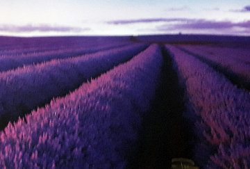 Lavender Fields Panorama - Peter Lik