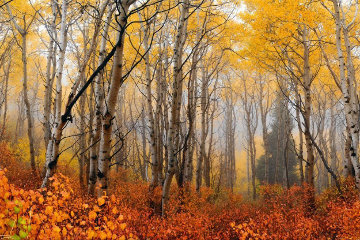 Autumn Mist Panorama by Peter Lik