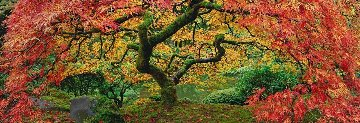 Autumn Spirit Panorama by Peter Lik