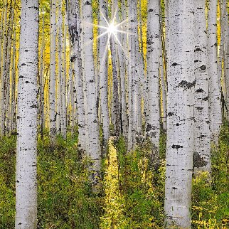 Brilliance Panorama - Peter Lik