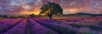 Morning in France Panorama - Peter Lik