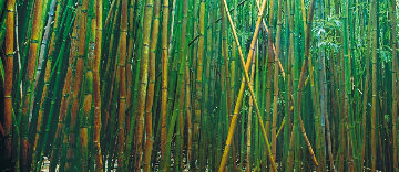 Bamboo (Pipiwai Trail, Hana, Hawaii) Panorama - Peter Lik