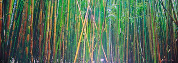 Bamboo AP (Pipiwai Trail, Hana, Hawaii) Panorama - Peter Lik