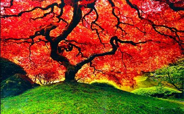 Tree of Life (Oregon) Panorama - Peter Lik