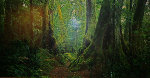 Ancient Rainforest (very small edition 100) Panorama - Peter Lik