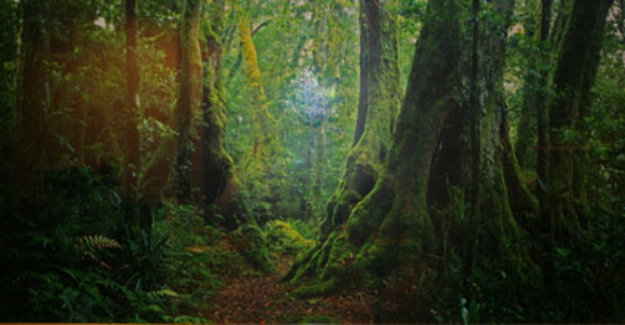 Ancient Rainforest (very small edition 100)