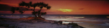 Pandanus Twilight (Frazier Island) (small edition) Panorama - Peter Lik