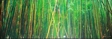 Bamboo (Pipiwai Trail, Hana, Maui Hawaii) Panorama - Peter Lik