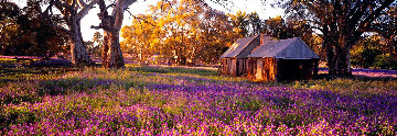 Settlers Meadow AP  (Wilpena Pond, South Australia) Panorama - Peter Lik