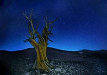 Starry Night  Panorama - Peter Lik