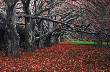 Enchanted (East Hampton, New York) Panorama - Peter Lik