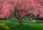 Tree of Dreams AP (Washington, State) Panorama - Peter Lik