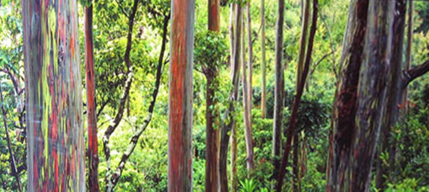 Painted Forest 2 Meter