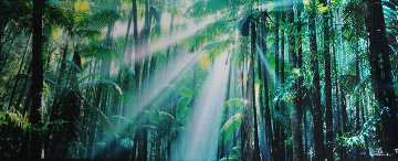 Enchanted Forest (Fraser Island, Queensland) Panorama - Peter Lik