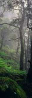 Living Forest Panorama - Peter Lik