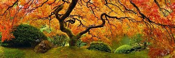 Tree of Zen AP Panorama - Peter Lik