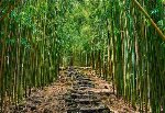 Enchanted Pathway Panorama - Peter Lik