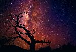 Tree of Universe (Mauna Kea, The Big Island. Hawaii) Panorama - Peter Lik
