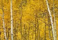 Yellow  Panorama - Peter Lik