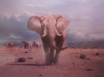 Elephant Territory 1988 30x35 Limited Edition Print - Rob MacIntosh