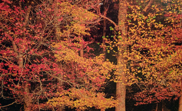 Colors of the Smokies