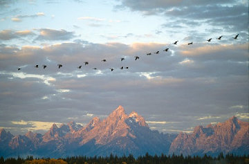 Autumn Passage - Tetons  Panorama - Thomas Mangelsen