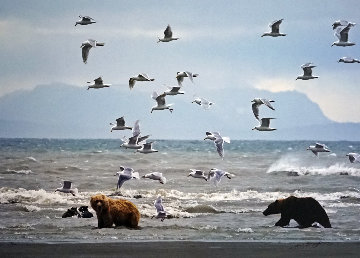 Bears With Gulls (Salmon Seekers) 2008 Panorama - Thomas Mangelsen
