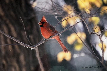 When Winter Comes-Cardinal 2000 Panorama - Thomas Mangelsen