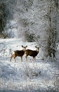 December Deer Panorama - Thomas Mangelsen