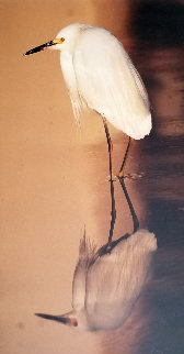 Images of Nature: Reflections - Snowy Egret 1995  Panorama - Thomas Mangelsen