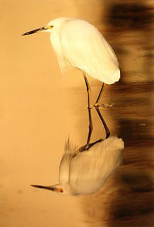 Reflections - Snowy Egret 1995 Panorama - Thomas Mangelsen
