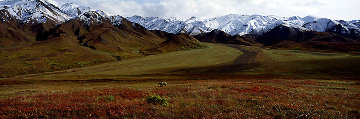 After the Ice Age - Grizzly Bear-Denali  Panorama - Thomas Mangelsen