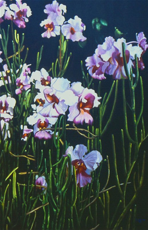 Blooming Orchids 58x37