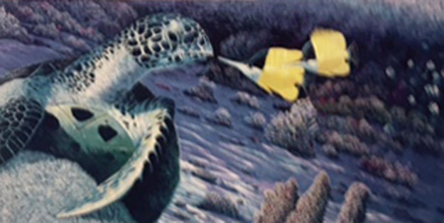Butterfly And Turtle 1990 With Remarque