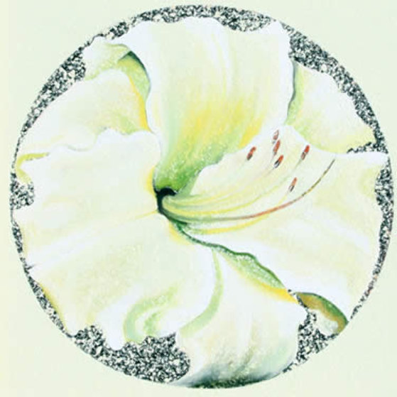Lemon White Lily 1982 26x26