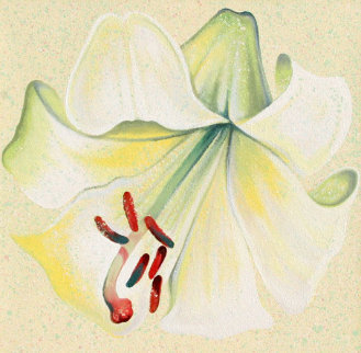 White Lily 1982 26x26 Original Painting - Lowell Blair Nesbitt