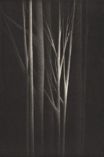Forest Nocturne IV 2001 Limited Edition Print - Robert Kipniss