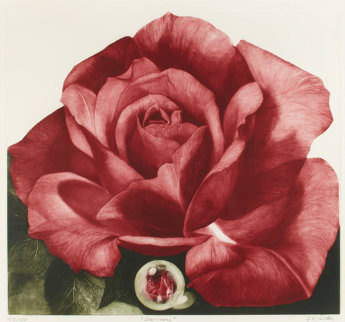 Glass Rose 1993 Limited Edition Print by G.H Rothe