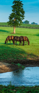 A Day in the Bluegrass Panorama - Rick Scalf