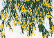 Yellow Mimosa 2015 Limited Edition Print by Donald Sultan - 0