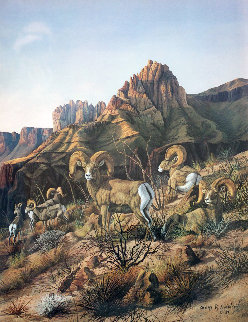 Rams of the High Country AP 1981 Limited Edition Print - Gary Swanson