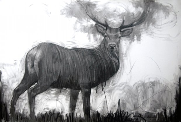 A Deer Drawing 2015  39x59