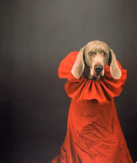 So Watteau 1999 Photography - William Wegman
