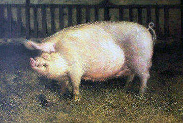 Portrait Of A Pig Limited Edition Print - Jamie Wyeth