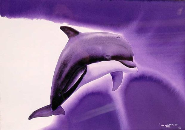 Key Dolphin Watercolor 1995 15x21
