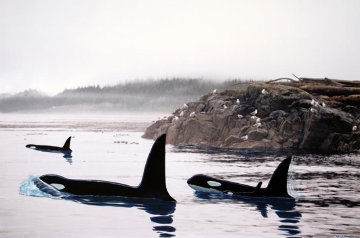Peaceful Orca Waters 2008 Limited Edition Print - Robert Wyland